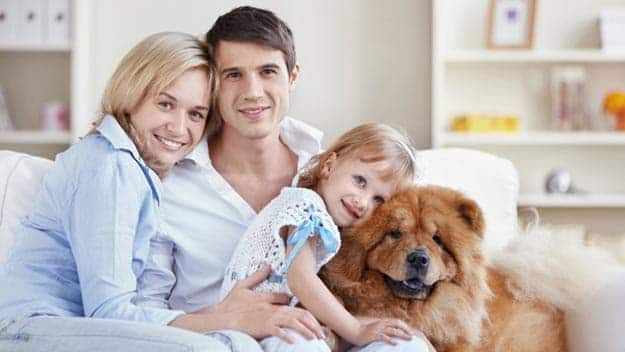 Wills & Trusts dog-young-family Direct Wills Wales